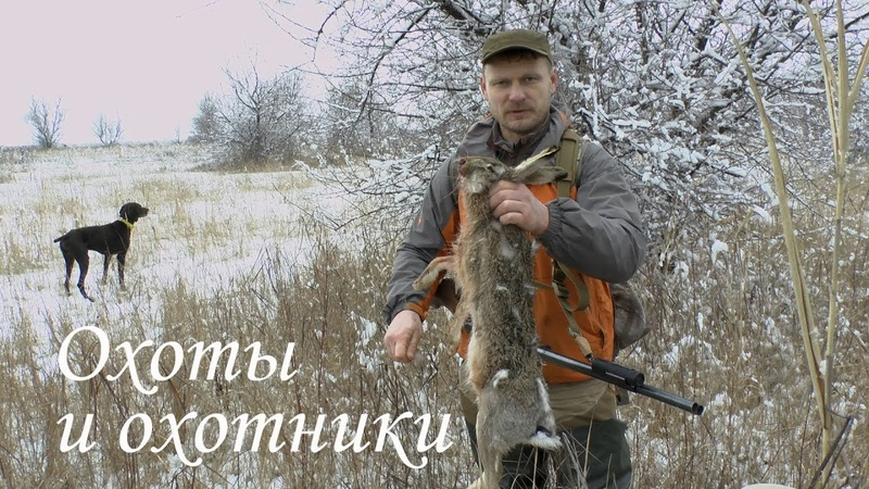 Охота на зайца с легавой стойка по зайцу Новые Азот Сибирь и Долг М3 не подвели