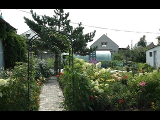 Цветущий двор в Красном Абакане - Абакан 24