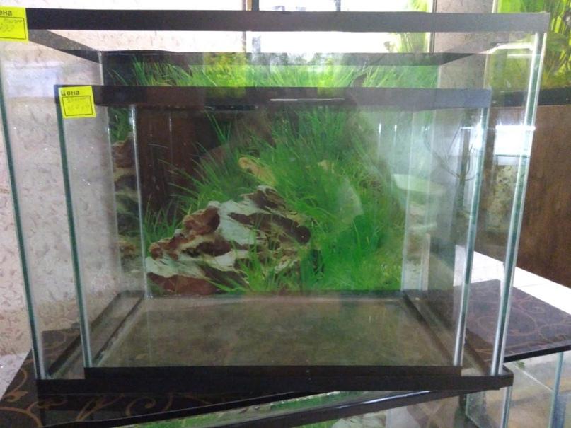 Купить, аквариумы, рыба, растения, | Объявления Орска и Новотроицка №9724