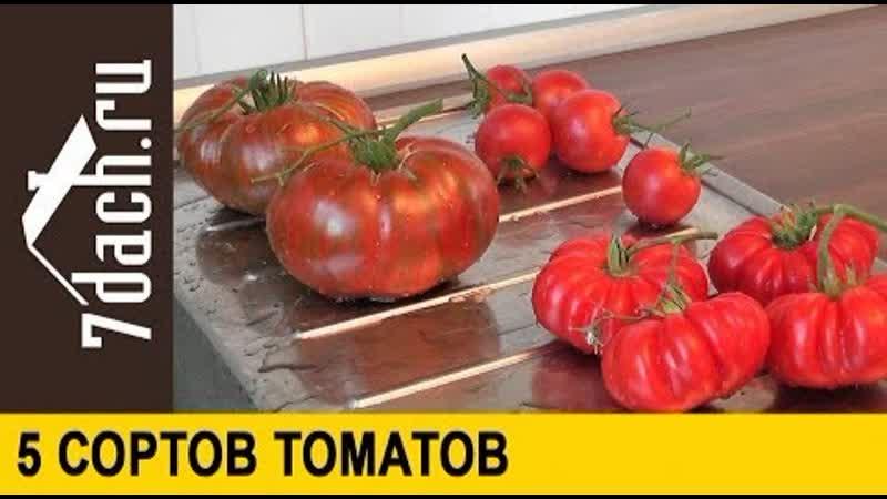 Сорта помидоров- 5 сортов средне- и крупноплодных томатов - 7 дач