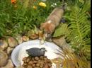 Нажмите чтобы включить звук 0 18 Оскар любимая собака западно сибирская лайка