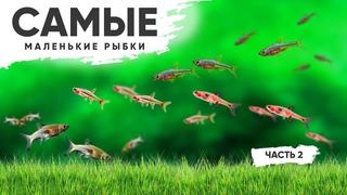 Маленькие рыбки для аквариума с живыми растениями. Часть 2. #Расборы