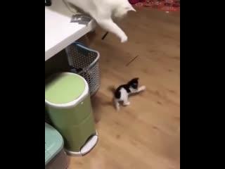 Кот играет с котёнком :)