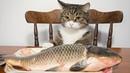 Я РЖАЛ ПОЛЧАСА. Смешные Коты и Собаки. ПРИКОЛЫ С ЖИВОТНЫМИ. 7