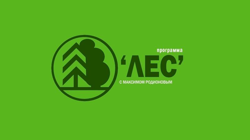 Лес юбилей вытегорского ЛДК №2