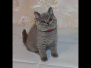 В продаже шикарная лиловая кошечка (г) и чёрный котик (г)