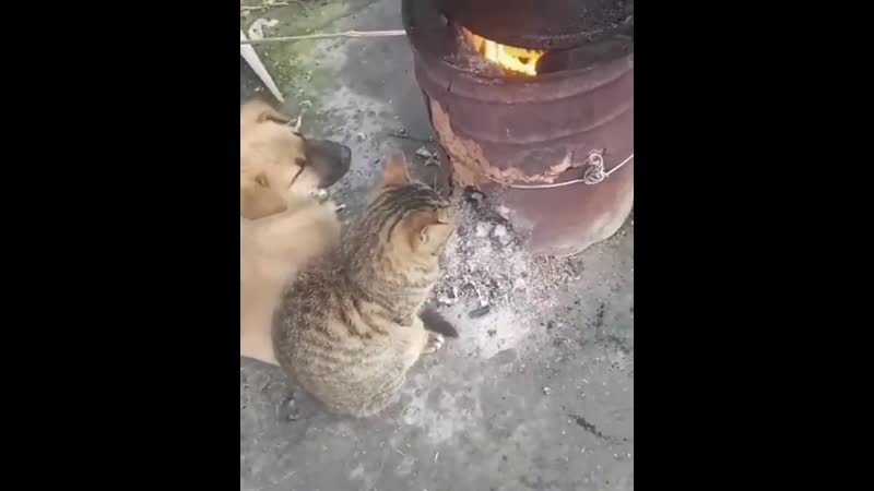 Бьётся в тесной печурке огонь.mp4