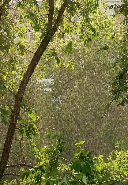 Дождевые струны осени