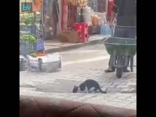 молодой человек в турецком городе Татване не мог проехать улицу, потому что на его пути котик пил из лужи