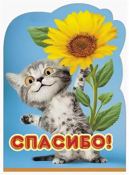 Кот открытка спасибо