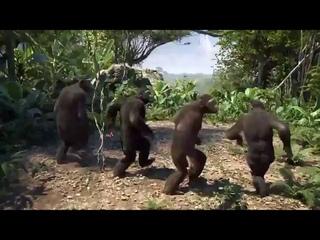 Monkeys Dance On Driftveil City Theme