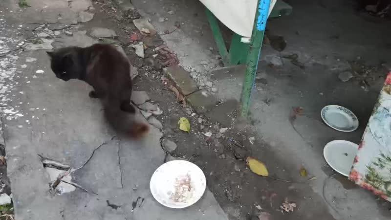 Эльдар Богунов дал котику рыбу и котиком фарш с рисом