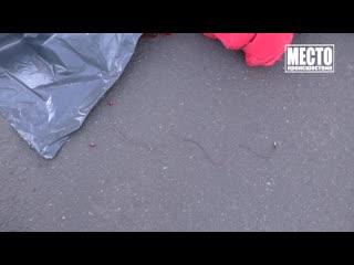 Женщина-водитель Паджеро насмерть сбила девушку, на ул. Воровского.