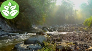 Morning. Mountain river. [10 hours] Rivers sounds (White noise for sleeping)