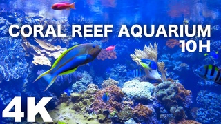 AQUARIUM 4k coral reef 4K with water sound 10 Hours for Meditation Relaxation Sleeping #RELAXTIME