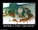 Личный фотоальбом Анны Харитоновой