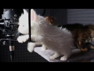 мими котята=3