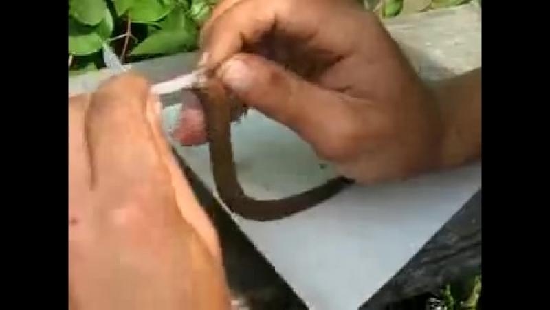 Поймал змею у моей девушки на даче снял шкуру и приготовил ее потом на барбекю ВКУСНЯТИНА только ел ее один я а остальные