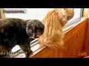 Прикольное видео про котов Приколы с кошками Наши любимые и прикольные котики Funny cats compilation