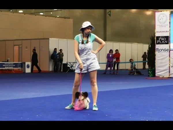 Танцы с собаками Евразия 2015 Dog Dancing Canine Freestyle