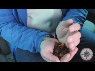 Освоение новых видов поиска (поиск янтаря)