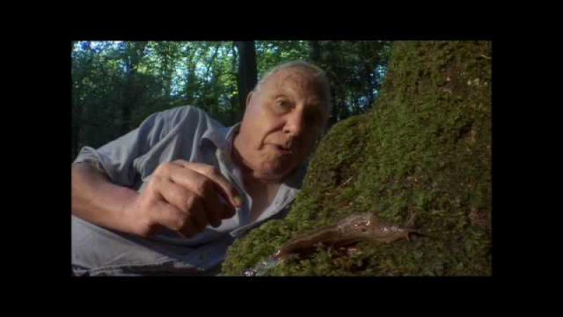 BBC Who Knew Slugs Could Be So Romantic
