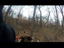 Охота с лайкой на кабана