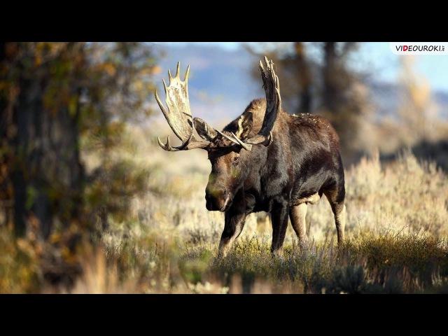 Видеоурок по географии Человек и природа