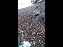 крым николаевка шторм 19 11 2015 и ракушки