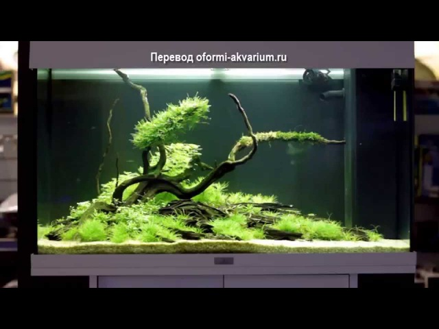 Декорирование аквариума на 140 л. в стиле Бансай