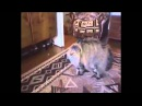 Как разговаривают животные. Прикольное видео.