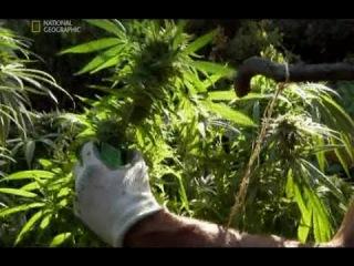 Документальные фильмы i про коноплю сажать семена марихуаны