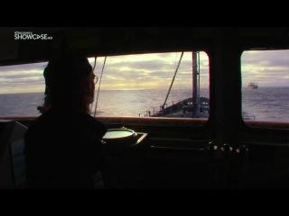 Китовые войны Точка кипения