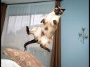 Funny Cats! ЛУЧШИЕ ПРИКОЛЫ с котами Самые смешные видео про кошки и коты, Подборка