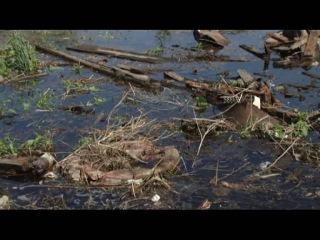 Жители Затона не беспокоятся из-за угрозы подтопления паводковыми водами
