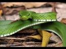 Investigaciones en pro del Cuidado de la Fauna Silvestre Amazonía TvAgro por Juan Gonzalo Angel