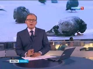 Онищенко: голубь - птица глупая и неряшливая