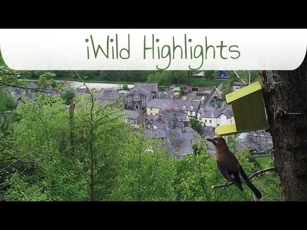 IWild North Wales Highlights