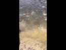 Такого чуда я никогда не видела. 30 апреля 2017 года Здвинский район, река Чулым