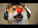 DOGE PLAYS CSGO! funny moments! 4
