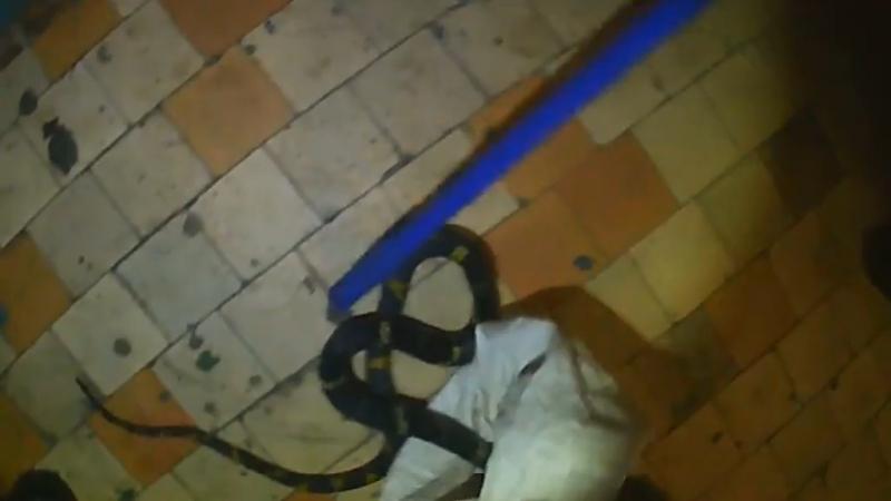 Хозяйка пришла в ужас Спасатели поймали в квартире ядовитую змею