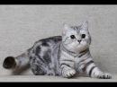 Кошка Котэ Джесика ловит майского жука на балконе. Говорящая кошка