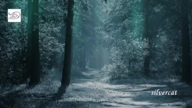 Debussy Clair de lune Лунный свет