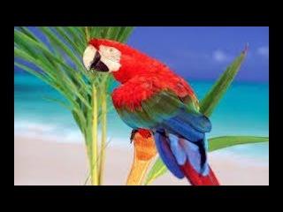 Exotic✨💦RelaxWeLove💦✨Relax Music 4K🌻🐦Most Beautiful Birds of the World🌻🐦Sleep Relax Meditation