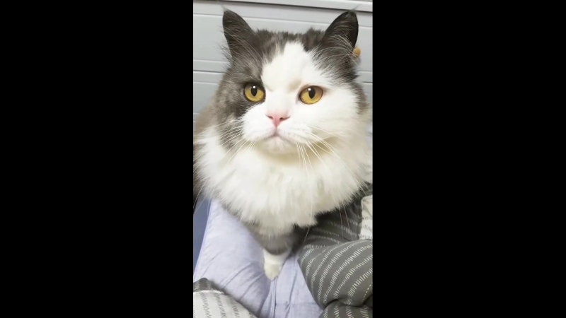 180531 Riu Hyeontae InstaStory cat Woori