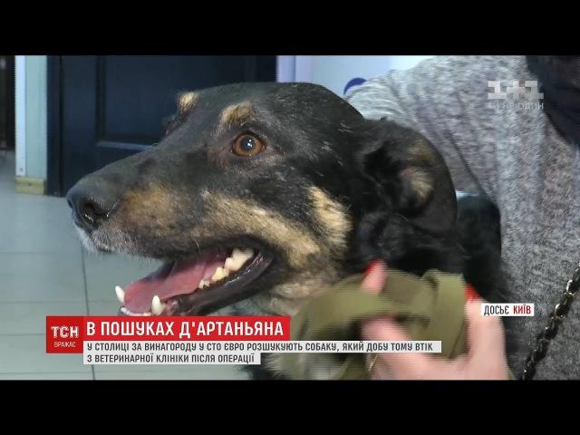 Зі столичної ветклініки втік пес, на лікування якого збирали усім світом