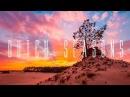 Dutch Seasons - A Timelapse Short Film - 4K - Veluwe
