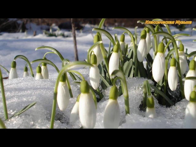 АНТОНИО ВИВАЛЬДИ Времена года Весна II Ларго Antonio Vivaldi