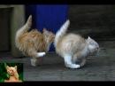 Приколы с кошками и котами 1. Подборка смешных и интересных видео с котиками и кошечками 2017