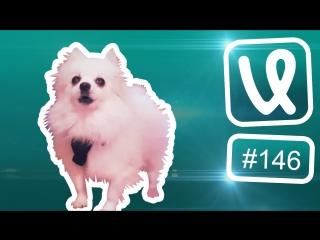 Лучшие ролики недели #146 одевай сиськи и поехали!